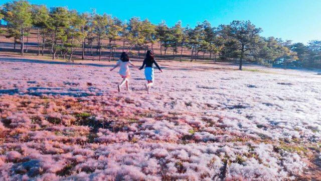 Địa điểm vui chơi Đà Lạt - Đồi cỏ hồng