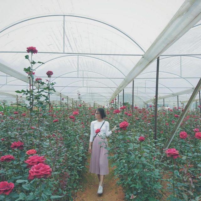 Địa điểm vui chơi Đà Lạt - Làng hoa Vạn Thành