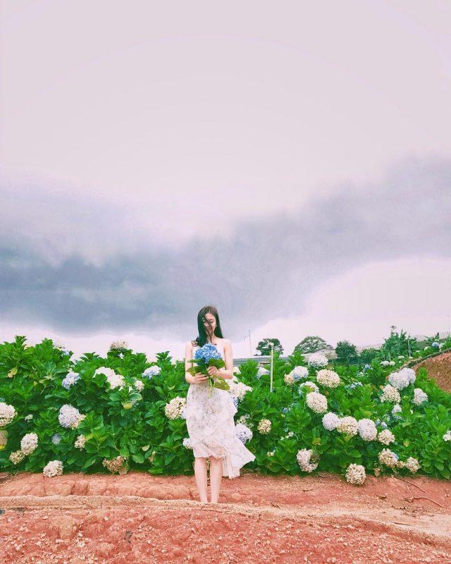 Địa điểm vui chơi Đà Lạt - Vườn hoa Cẩm Tú Cầu