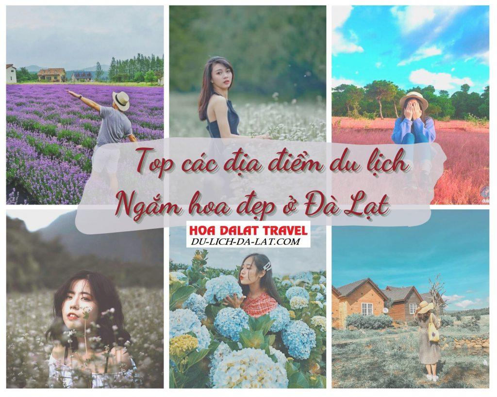 Các địa điểm du lịch ngắm hoa đẹp ở Đà Lạt