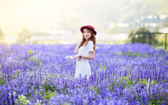 Shop hoa lavender Đà Lạt