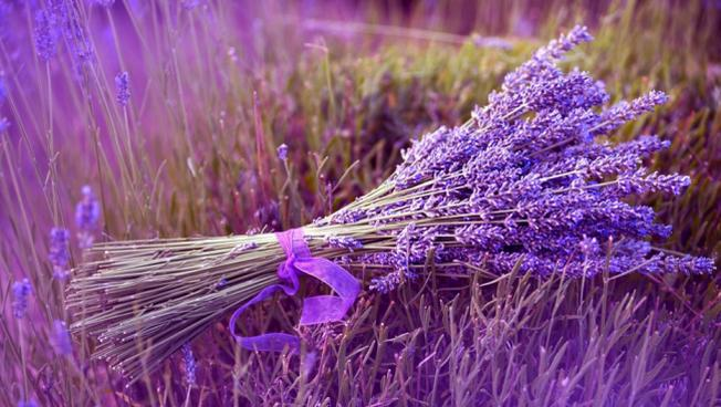 Sự tích hoa Lavender Đà Lạt