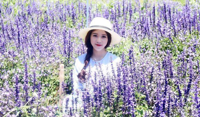 Tour Vuon Hoa Lavender Da Lat 1