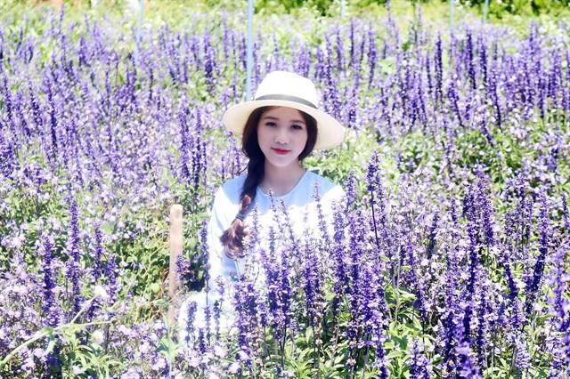 Tour vườn hoa Lavender Đà Lạt